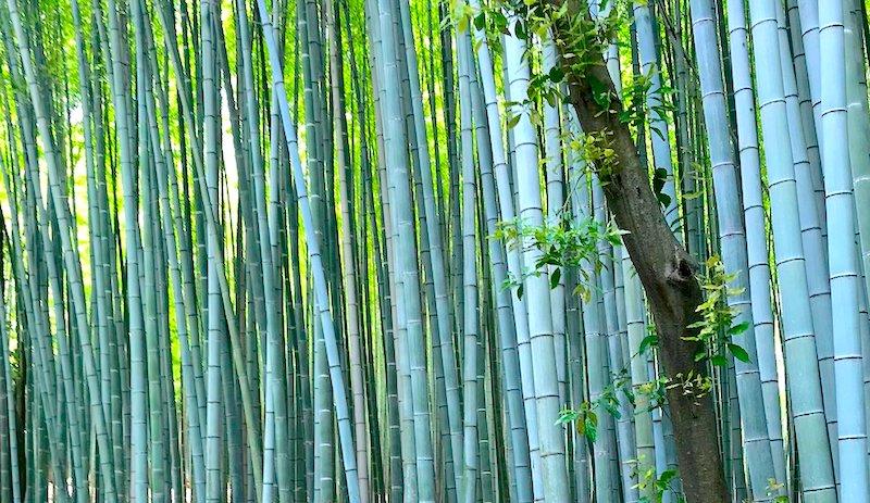 Bambus Materiał wegański, bawełna czy bambus, bambus co to jest, Bambus Co to za materiał