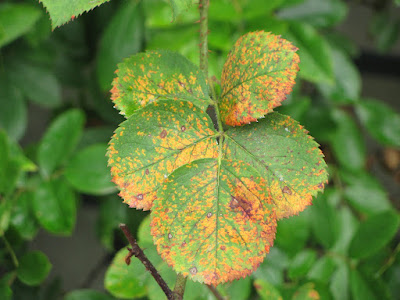 Common plant and flower diseases
