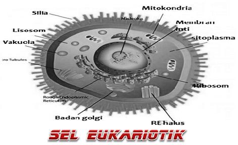 Pengertian Sel Eukariotik Serta Struktur Dan Bagiannya