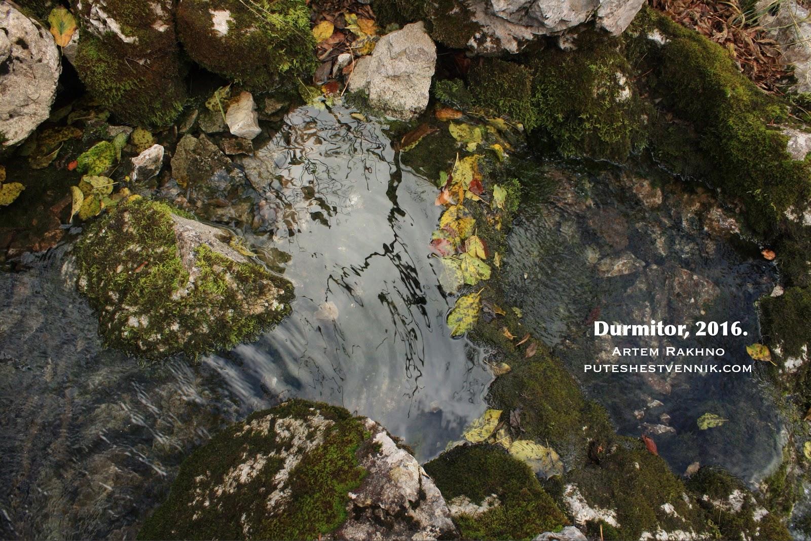 Листья и камни в ручье