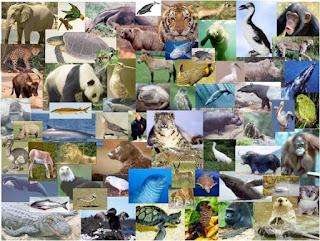 bahwa pengelompokan makhluk hidup dalam sistem pembagian terstruktur mengenai lima kingdom terdiri dari king Pengertian Kingdom Monera, Protista, Fungi, Plantae, dan Animalia