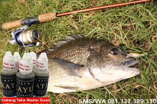Umpan Untuk Ikan Nila Galatama Master Essen Katilayu