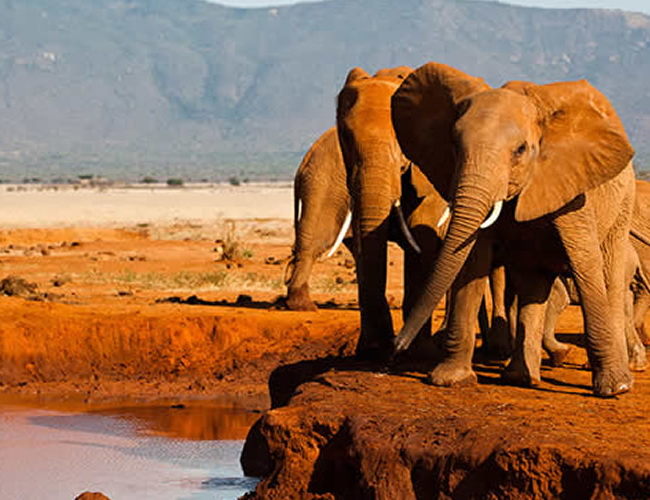 Xvlor Tsavo National Parks is one of the largest conservation in the world