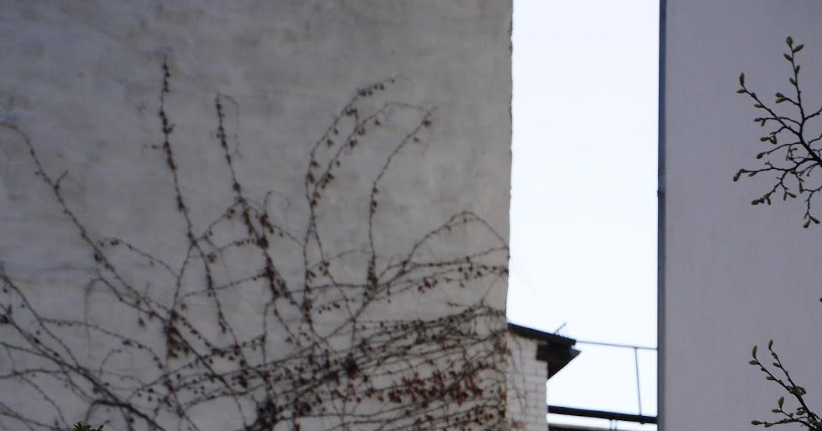 Bambuns blomning orsakar svaltkatastrof