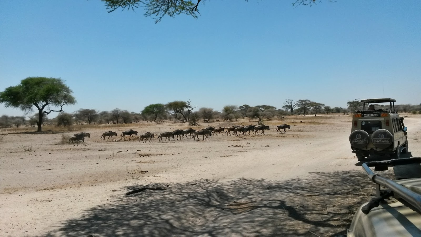 tarangire africa afrika