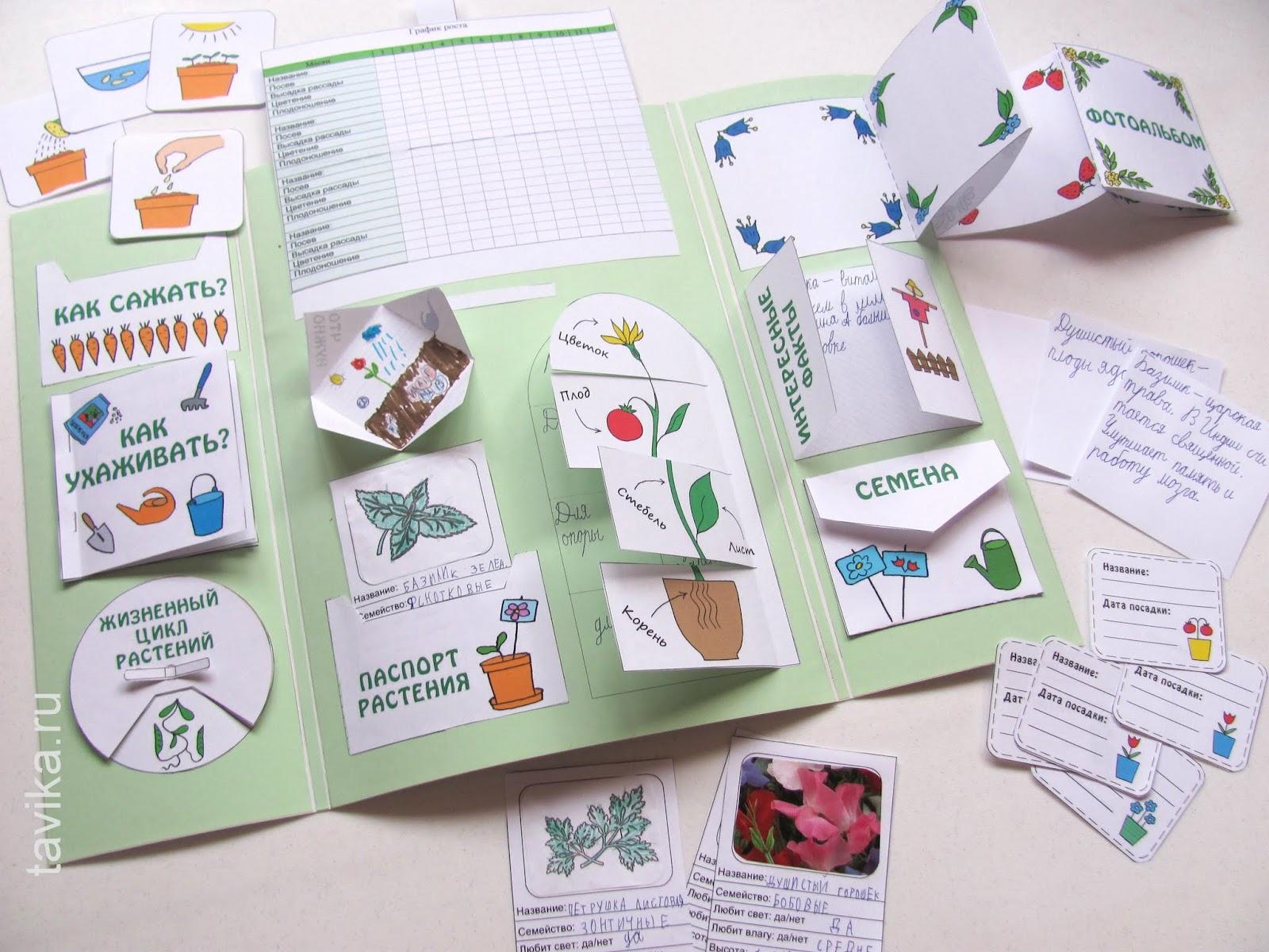 Как сделать лэпбук о растениях. Шаблоны для распечатки