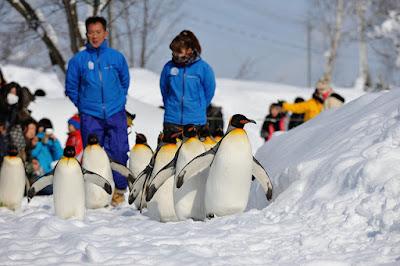 Penguin Parade Japan