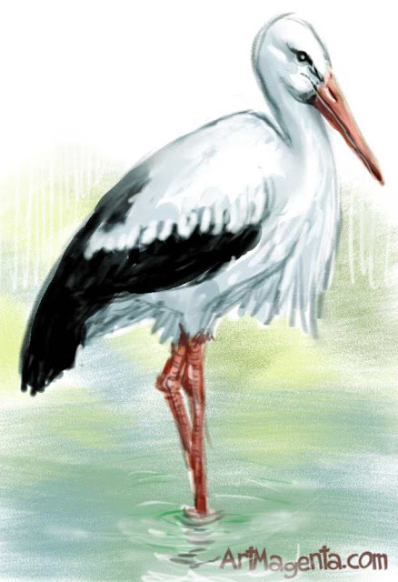 White stork sketch painting. Bird art drawing by illustrator Artmagenta