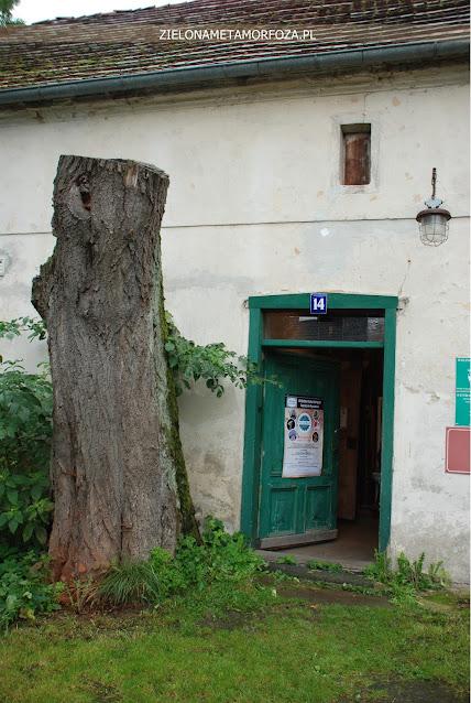 stare drzewo przy domach