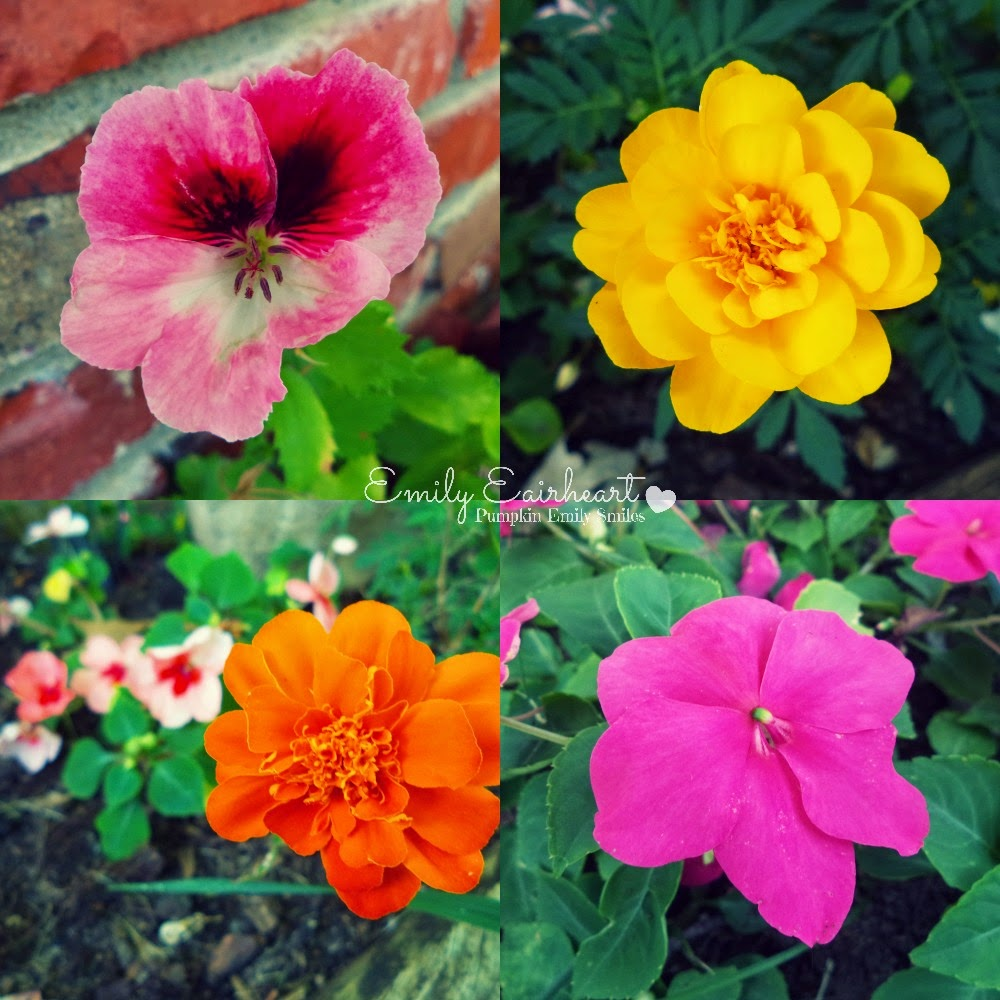 Marigolds and Impatiens collage