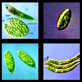 Macam - Macam Sistem Gerak Pada Tumbuhan Serta Pengertian Jenis Gerak Pada Tumbuhan