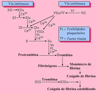 cascada de la coagulación de la sangre