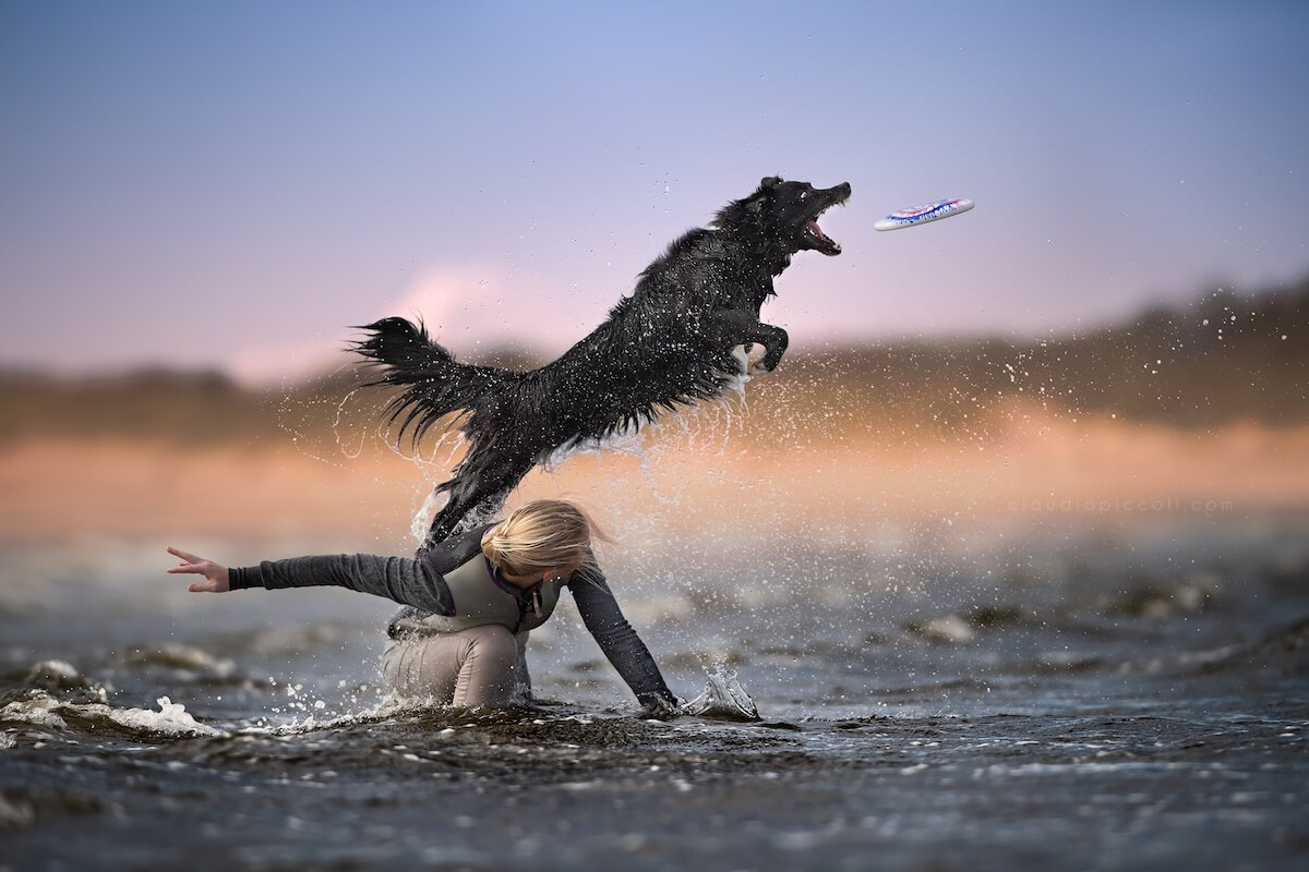 Breathtaking Pictures Of Dogs Catching Frisbees In The Air