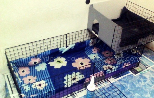 Yuan Perdana Blog's: Macam-macam Kandang Marmut (Guinea Pig)