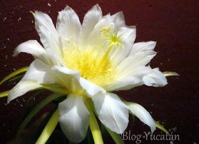 Flor en Maya