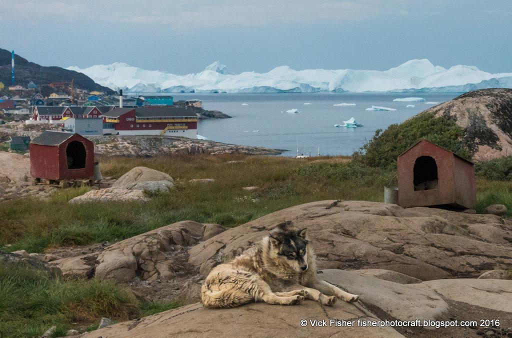 Greenland dogs icebergs town Ilulissat Jakobshavn Danish Denmark houses scenic colorful