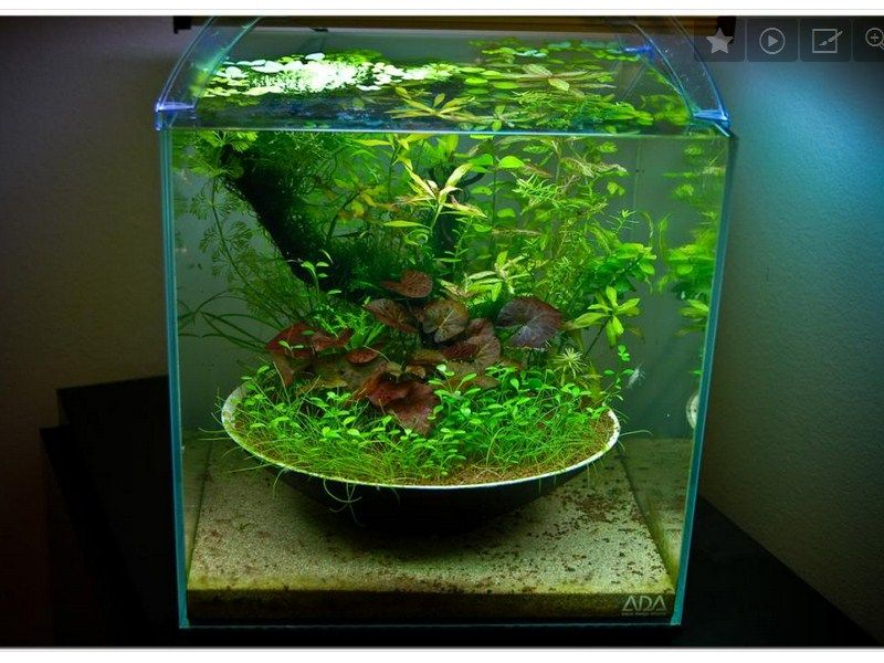 Aquarium Unik Buatan Sendiri