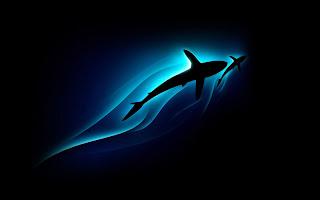 Baby Shark Wallpaper - Wallpapers Animal