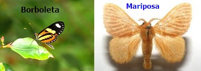 Borboletas e mariposas são insetos muito parecidos, assim, não basta um simples olhar para diferenciá-las . Mas, sabendo o que as distinguem, é possível fazer a identificação correta. De um modo em geral, as borboletas exibem um colorido mais vibrante, intenso ou reluzente. As mariposas, por sua vez, costumam apresentar um colorido mais opaco, não tão intenso quanto o das borboletas. Mas essas são apenas observações genéricas, que não servem de base para diferenciá-las.De um modo em geral, as borboletas exibem um colorido mais vibrante, intenso ou reluzente. As mariposas, por sua vez, costumam apresentar um colorido mais opaco, não tão intenso quanto o das borboletas. Mas essas são apenas observações genéricas, que não servem de base para diferenciá-las.