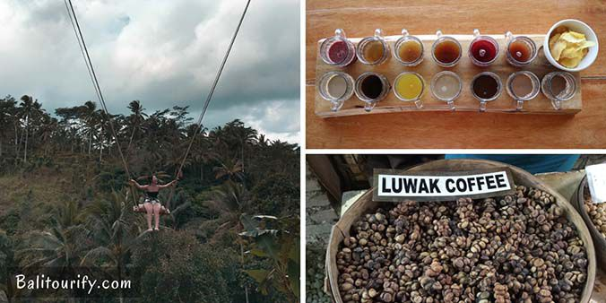 Herbal Tea - Luwak Coffee Tasting and The Swing, Full day Bali Ubud and Tanah Lot Temple Bali Sunset Tour