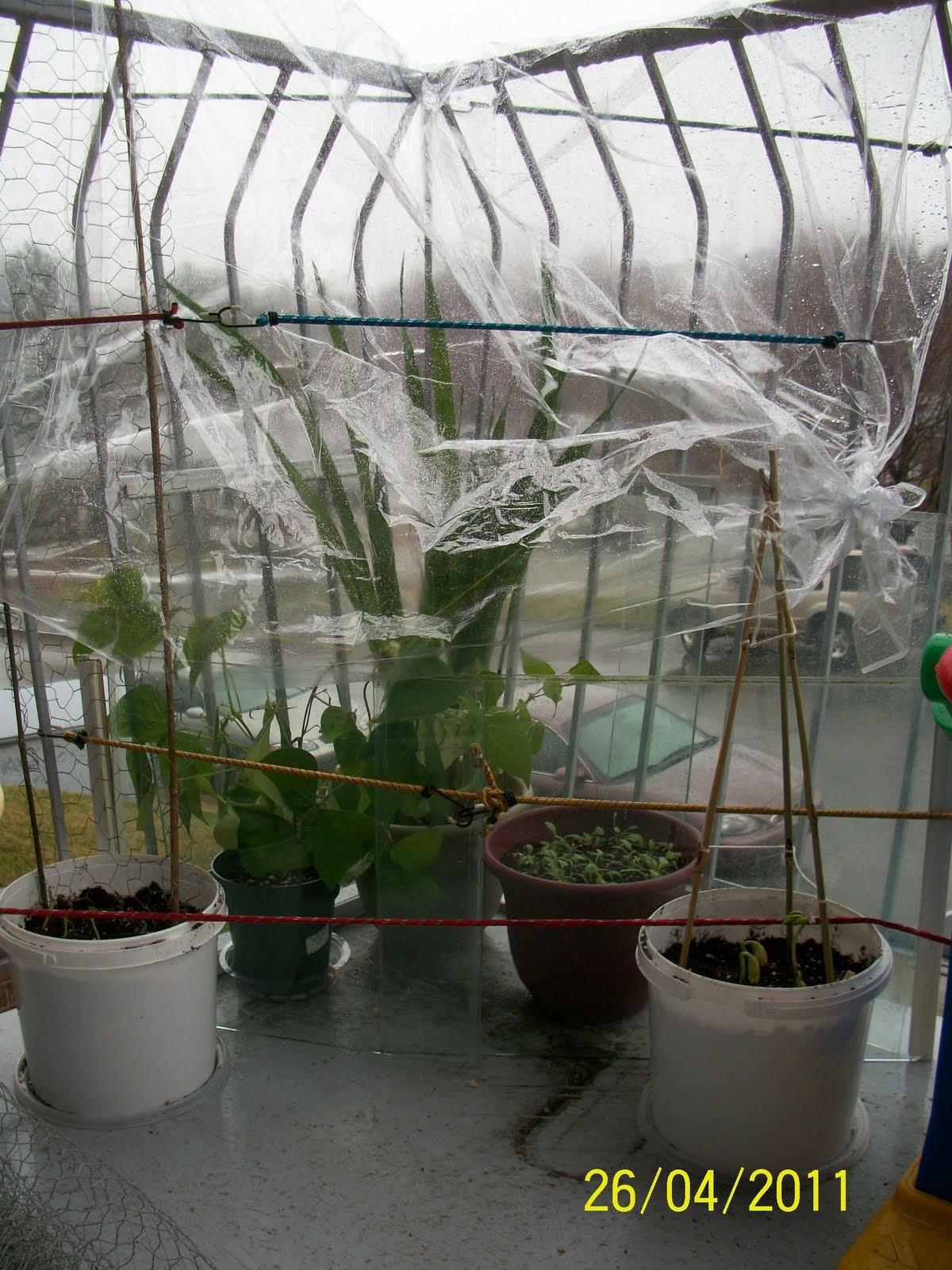 le jardin des poulettes potager en pot sur mon balcon. Black Bedroom Furniture Sets. Home Design Ideas