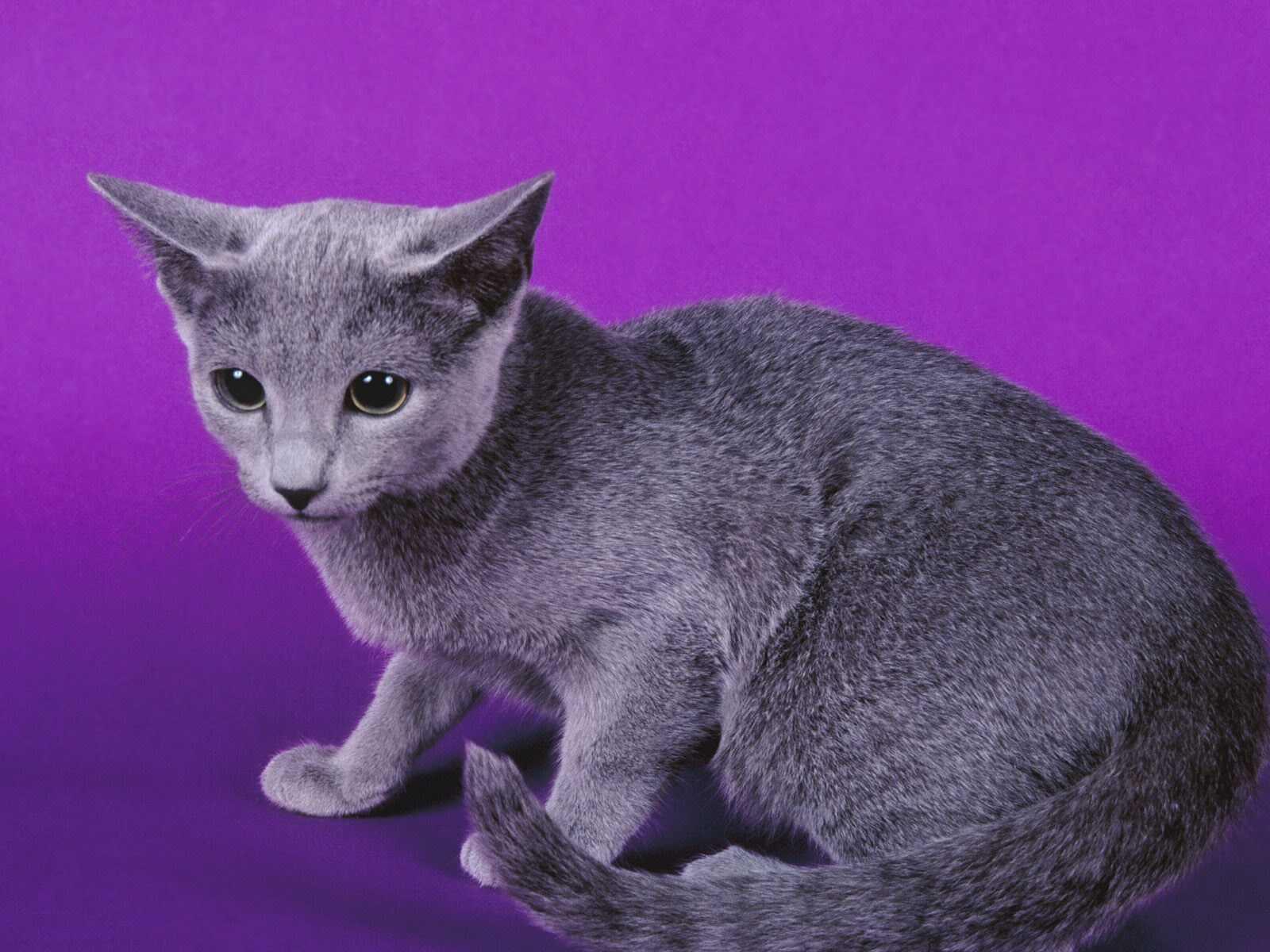 Gatos Cats Mascotas Wallpapers Fondos De Pantalla Hd