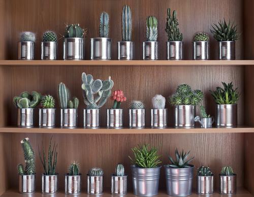 Latas de conserva utilizadas como vasos para cactos naturais