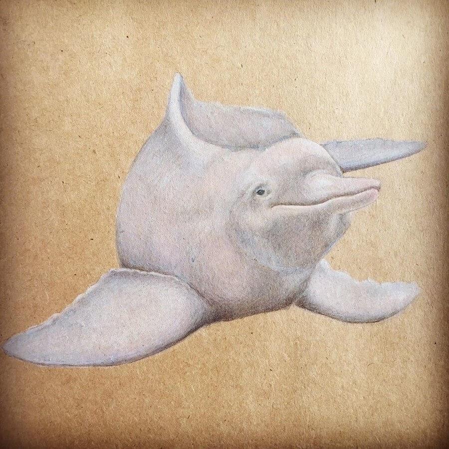 08-Pink-River-Dolphin-Theartakk-www-designstack-co