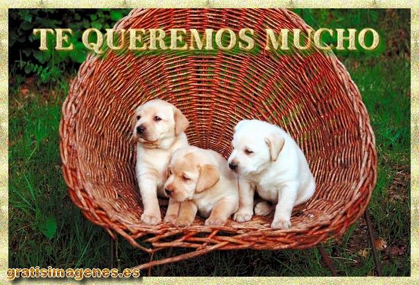 Fotos De Animales Salvajes Para Fondo De Pantalla: Fotos De Animales Salvajes Para Descargar Gratis