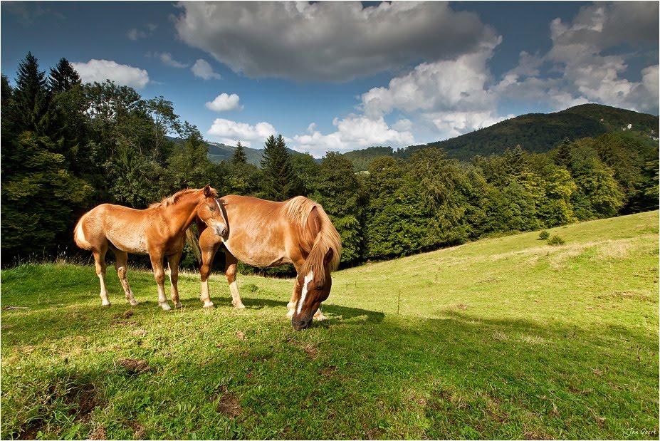 lineage-horses-modern-cavalos-modernos-linhagens-antigas-evolção-vetarq
