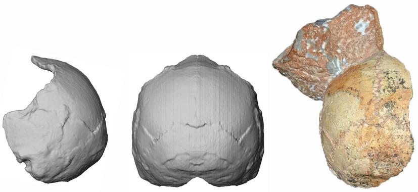 Reconstrucción del cráneo Apidima 1. / Katerina Harvati, Eberhard Karls University of Tübingen