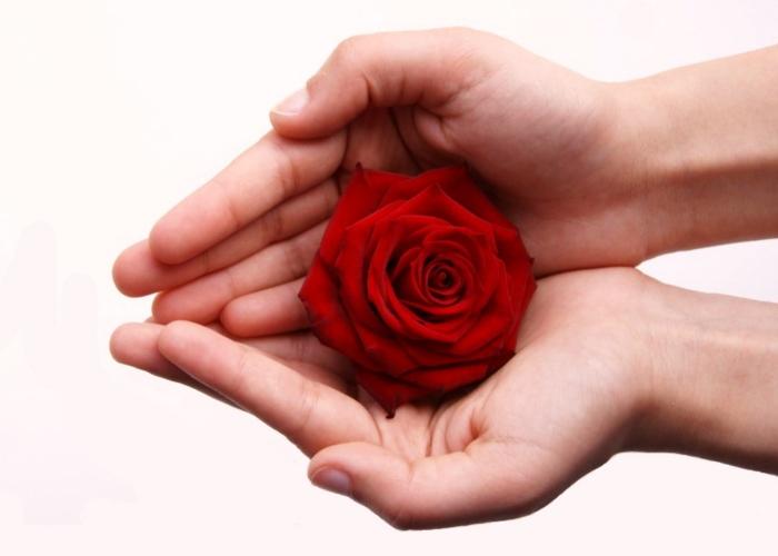 roza-na-dloni