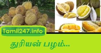 ஆண்மை பலம் கூட்ட, குழந்தை பிறக்க - துரியன் பழம் (இயற்க்கை உணவு), aanmai peruga, aanmai kuraivu maruthuvam tamil, sperm count increase, aanmai kurai, durian fruit details in tamil, kulanthai pirakka sathu niraindha unavu durian pazham