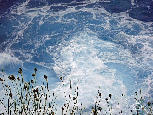Knapweed and water photo