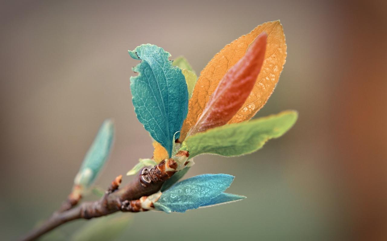 Los colores de la naturaleza. Hojas-de-color-naturaleza