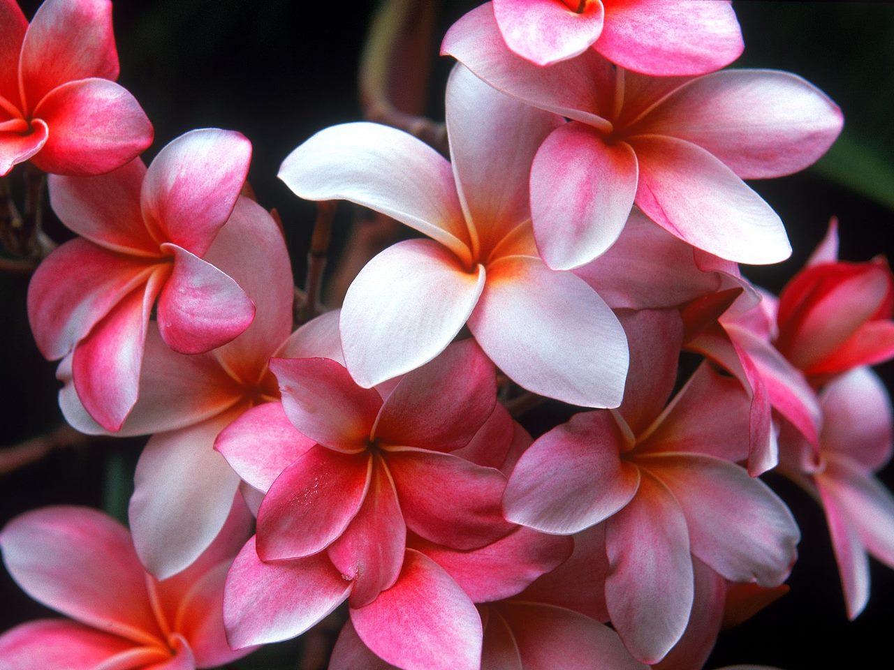 Fotografias De Flores Preciosas