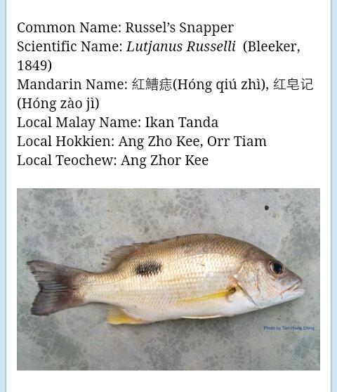 Segalanya Tentang Kehidupan Laut Dan Sungai Nama Nama Ikan Di Malaysia