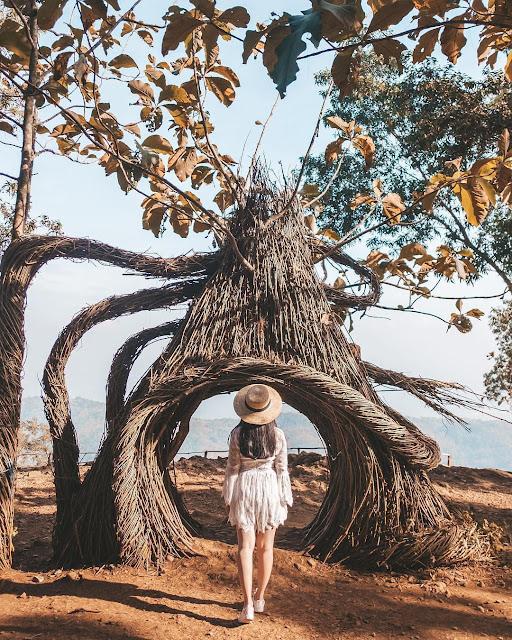 Hutan Pinus Pengger