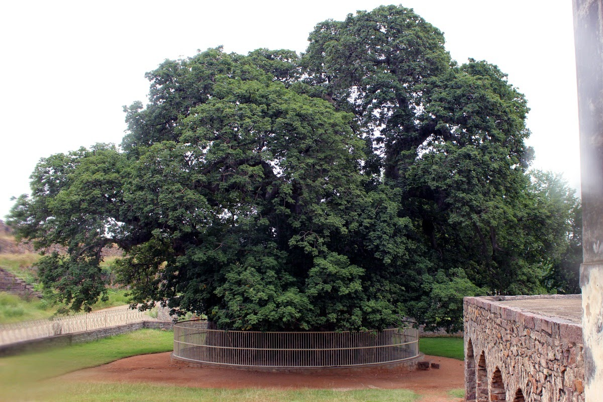 Image result for golconda fort tree