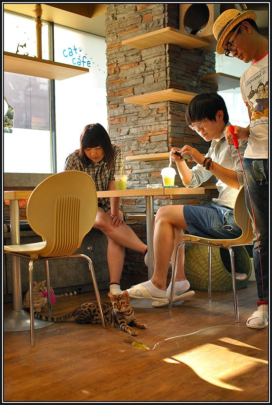 cat cafe south korea