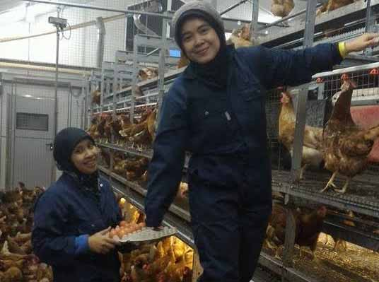 Pusat Ayam Dunia Buka Laboratorium Inovasi Unggas