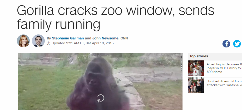 The Mindless Freaks: Gorilla cracks glass at Henry Doorly ...