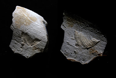 35,000-year-old carving of bird found in SW France