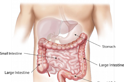 Do not Want to Get Digestive Disorders? Avoid These 5 Foods!