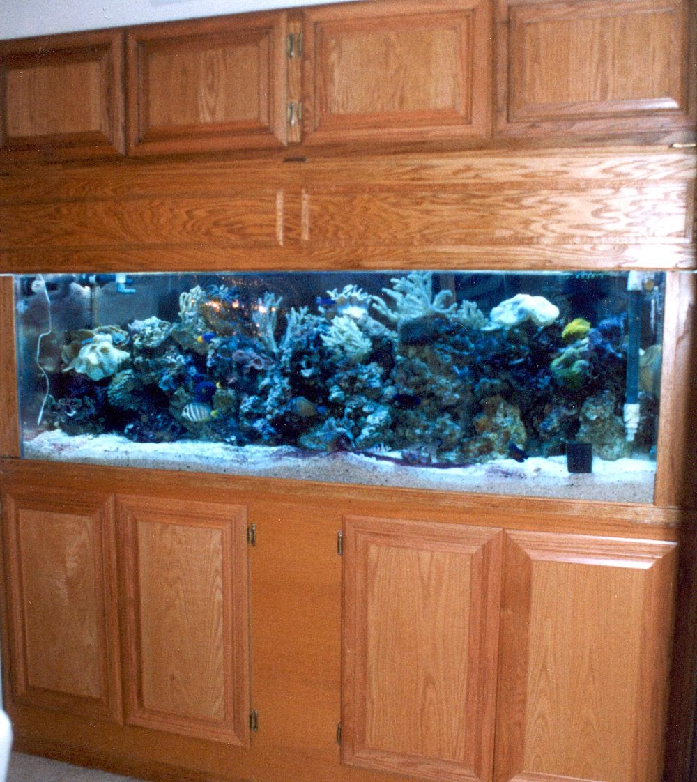 Home Aquarium Design Ideas: Recipes,Interior Home Design
