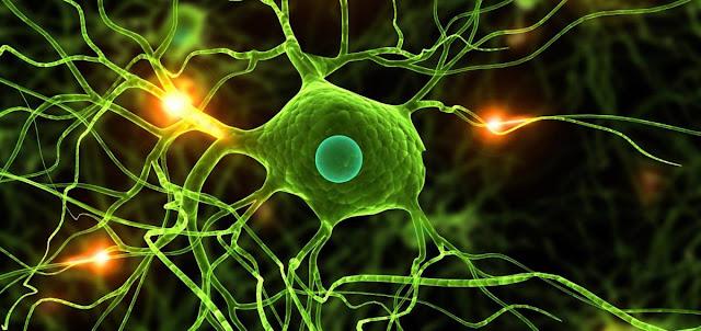 Transmision sinaptica y biologia