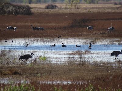 Llano Seco Unit WMA