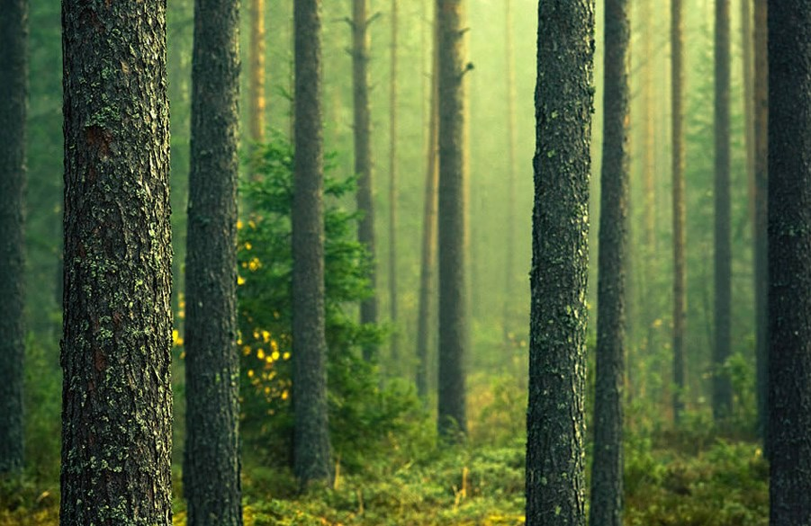 Hutan cantik Fotografi Foto Landscape dengan Hutan Yang Luar Biasa Cahaya dan Backligth Indah