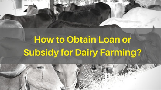 How to Obtain Loan or Subsidy for Dairy Farming?
