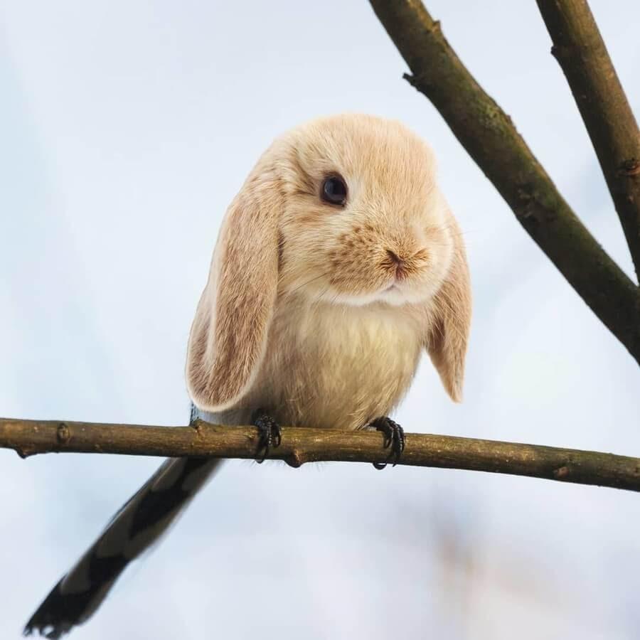08-Bunny-Bird-AOG-Fredriksen-Animal-Art-www-designstack-co